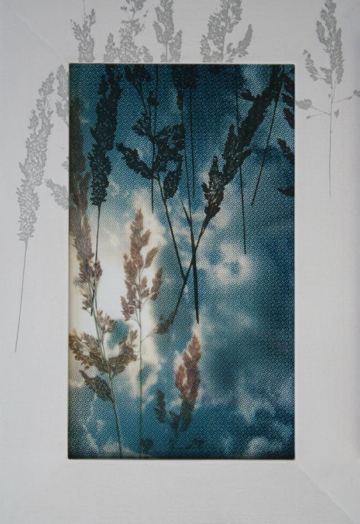 Wede zaden  zeefdruk op glas-papier-lijst gedroogde plant 38 x 25 cm
