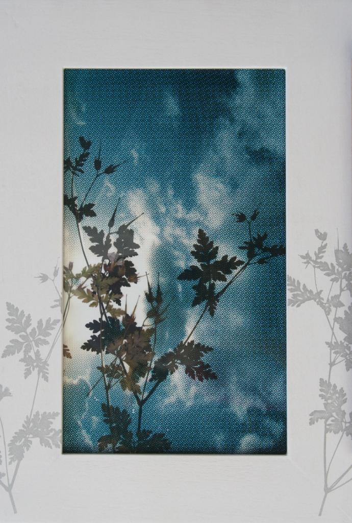 Ooievaarsbek  zeefdruk plas-papier-lijst gedroogde plant 38 x 25 cm