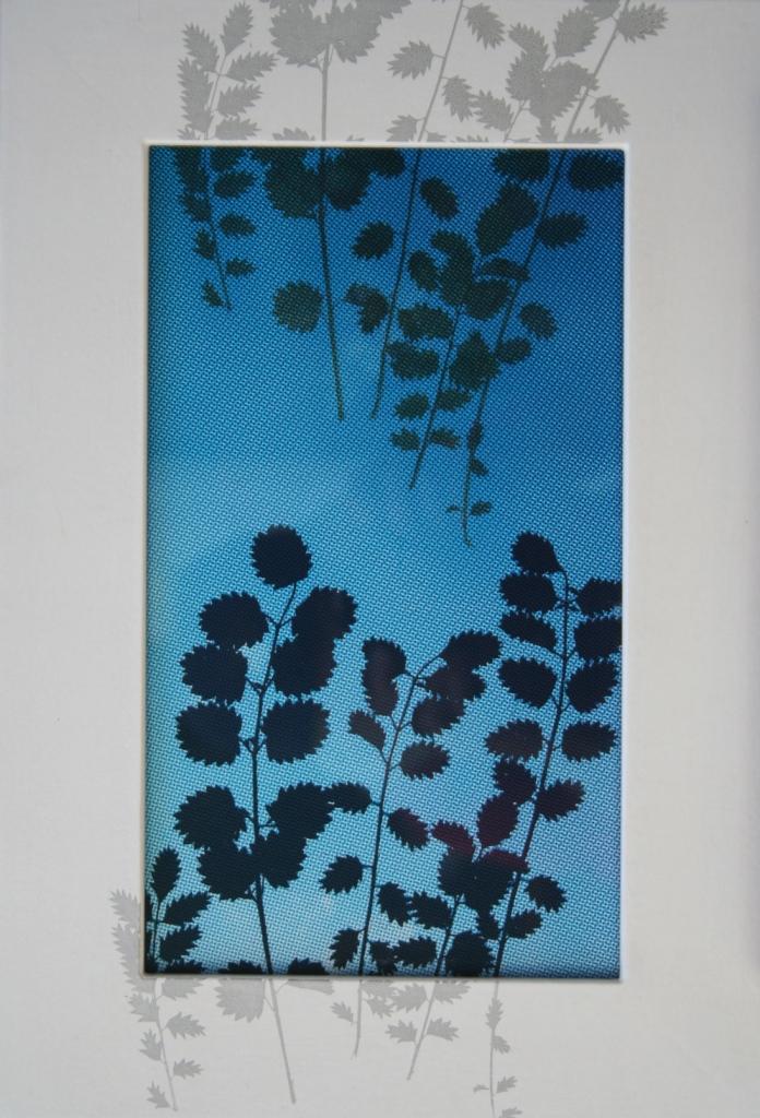 Pimpernelblad  zeefdruk op glas-papier-lijst gedroogde plant 38 x 25 cm